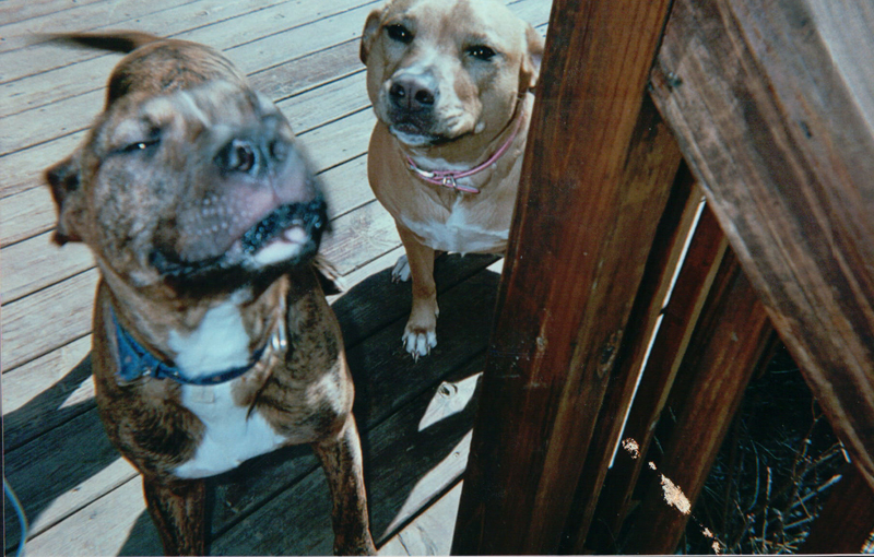 Remember, there are no bad dogs, just bad owners (Harold & Zena)